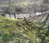 Borinska reka002