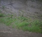 borina poplava7